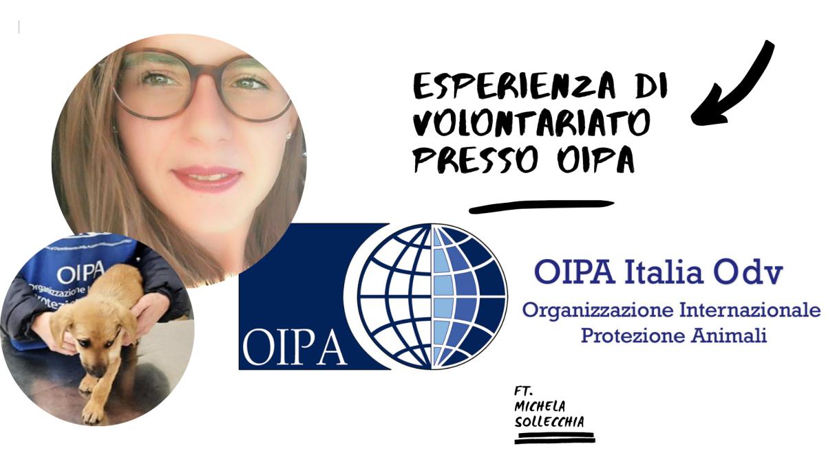 Esperienza di volontariato presso l'OIPA ft. MichelaSollecchia