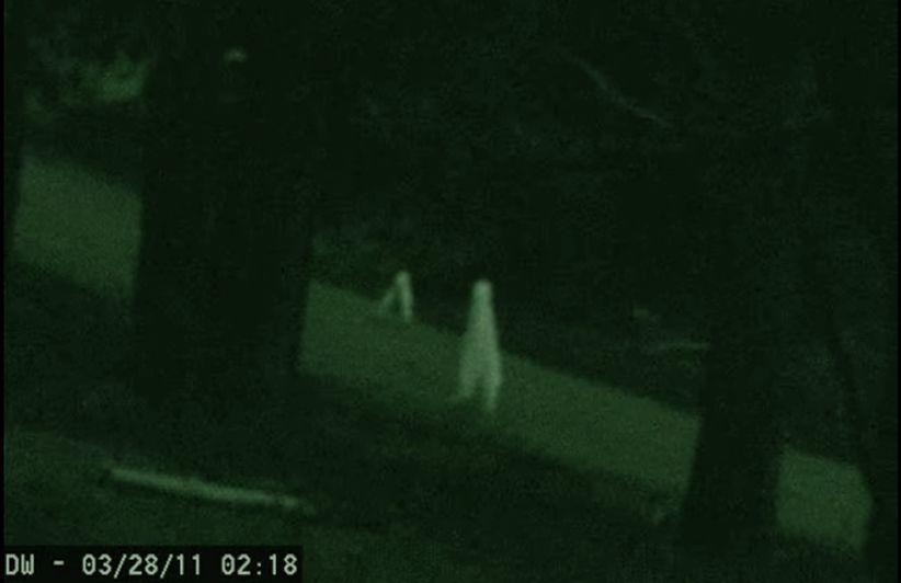 I Fresno nightcrawler: un avvistamentoincredibile